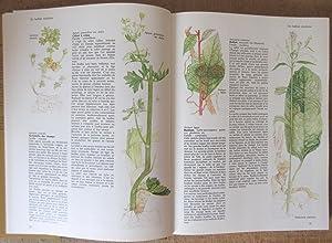 Le Livre des Herbes et des Epices: GARLAND, Sarah