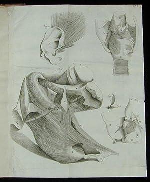 Observationes anatomicae: Santorini, Giovanni Domenico