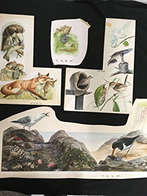 Maurice J Pledger Collection of 15 original artwork illustrations of birds and other animals wate...
