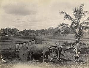 Karbouwen, karos, man en jongen, Java.: CÉPHAS, Kassian.