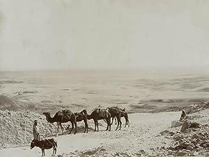 Algeria, in the dessert, camels.: ALGERIA.