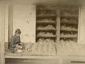 Gathering the cocoons.: JAPAN (ANONYM).