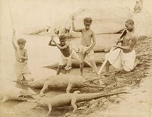La chasse des crocodiles.: ZANGAKI (C. &