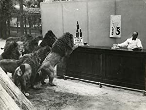 Lionsfarm, El Monte, California. Group of performing lions at a improvised bar (Free Lunch).: ...
