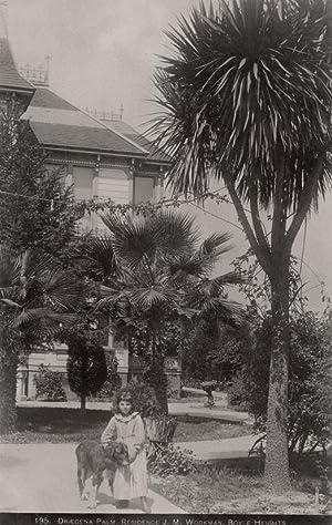 Draecene Palm. residence J. M. Workman, Boyle Heights.: BLANCHARD.