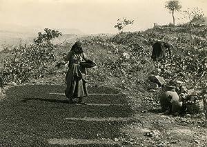 Two women in field-work.: LIBANON.