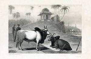 The Braminee Bull.: DANIELL R. A., William.