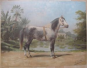 Het Sandelhout Paard.: EERELMAN, OTTO.
