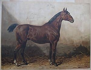 Het Holsteinsche Paard.: EERELMAN, OTTO.