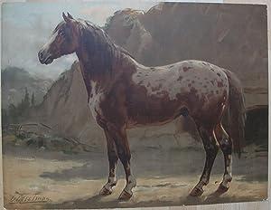 Het Pinzgauer Paard.: EERELMAN, OTTO.