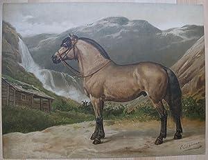 Het Noorweegsche Paard.: EERELMAN, OTTO.
