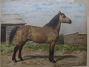 Het Canadeesche Paard.: EERELMAN, OTTO.
