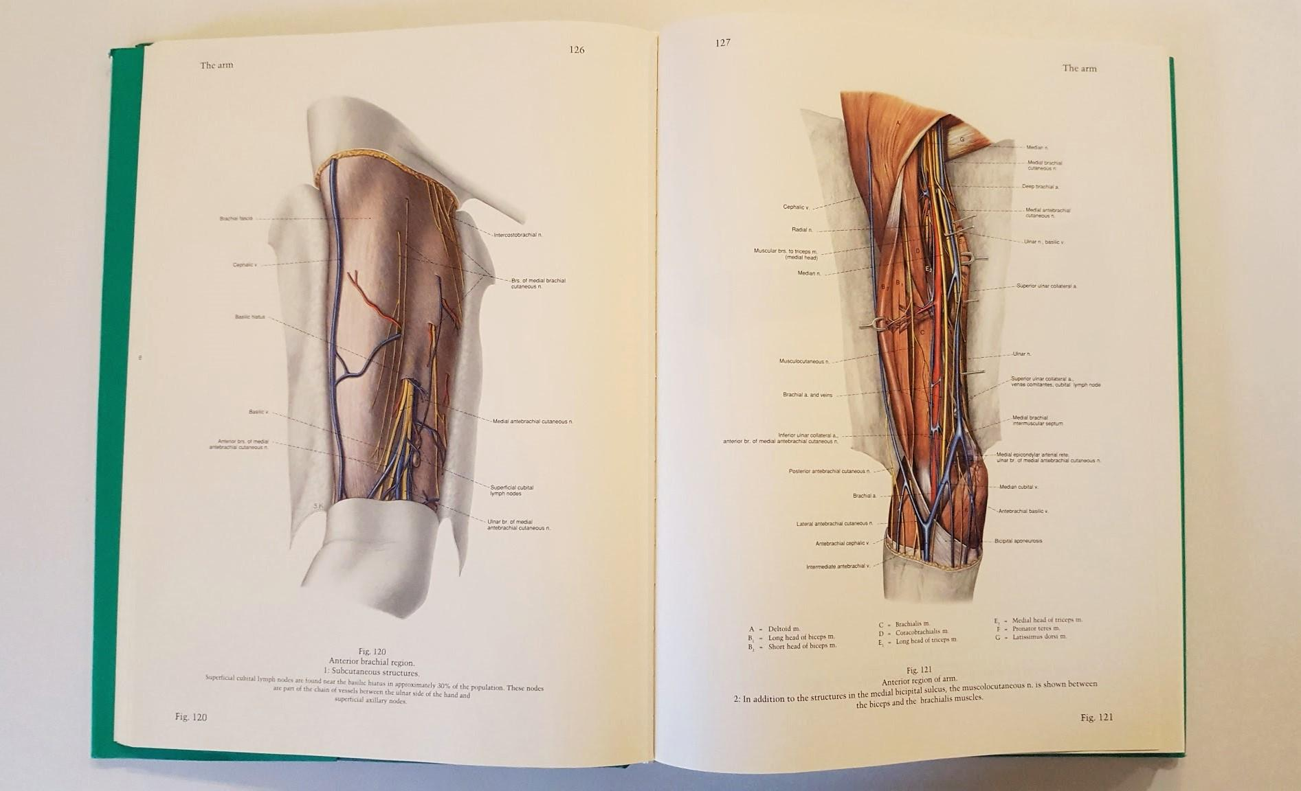 Pernkopf Anatomy Vol 2 Atlas Of Topographic And Applied Human