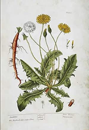 A Curious Herbal, containing Five Hundred Cuts,: Blackwell, Elizabeth