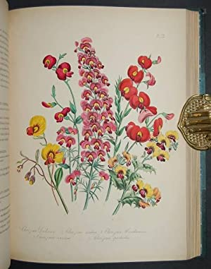 The Ladies' Flower-Garden of Ornamental Greenhouse Plants.: LOUDON (Mrs. [Jane