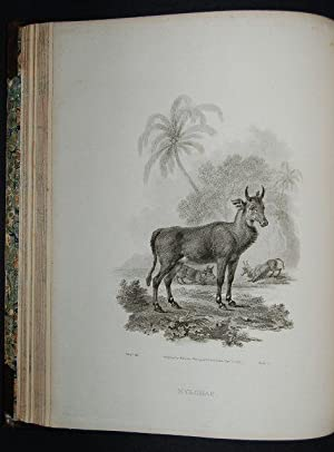 A Cabinet of Quadrupeds; consisting of Highly-Finished engravings, by James Tookey; from Drawings, ...
