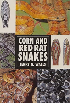 Corn and Red Rat Snakes.