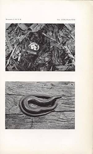 Notes on Reptiles from Fukien and Other Chinese Provinces: Pope, Clifford H.