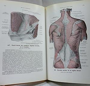 ATLAS DE ANATOMIA HUMANA TOMO 2- REGIONES,: Spalteholz, Werner