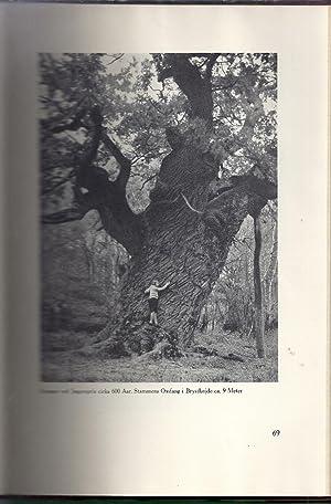 Danske Skove Og Traeer: Werner, Sigvart
