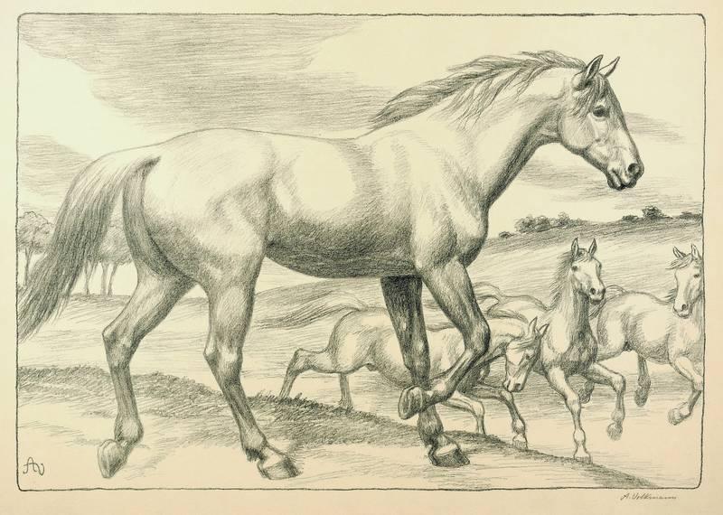 Volkmann, Arthur. - Galoppierende Pferde.