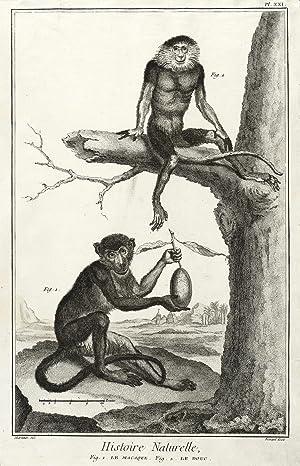 Affen. - Makake & Kleideraffe. - Encyclopédie.: Denis Diderot &