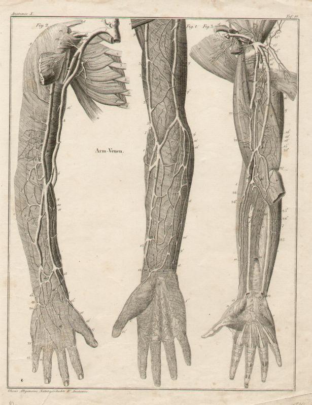 Fein Anatomie Der Venen In Arm Bilder - Anatomie Ideen - finotti.info