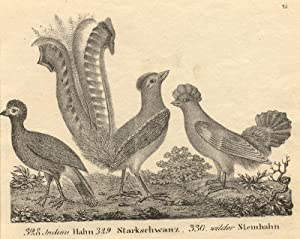 328. Indian Hahn, 329. Starkschwanz, 330. wilder Steinhahn.: Vögel