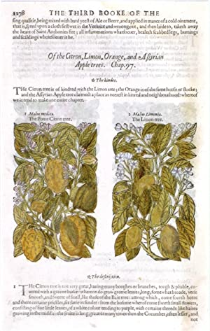 THE POME CITRON TREE', 'THE LIMON TREE'. Two illustrations on one page, with text. From the third ...