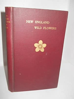 New England Wild Flowers and Their Seasons: Bailey, William Whitman