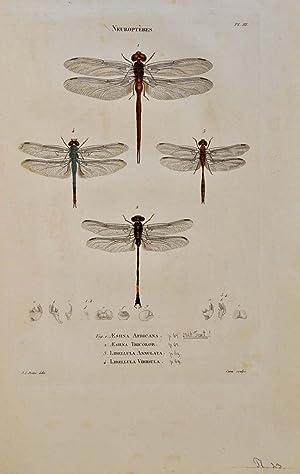 Insectes recueillis en Afrique et en Amerique, dans les Royaumes d'Oware et de Benin, a ...