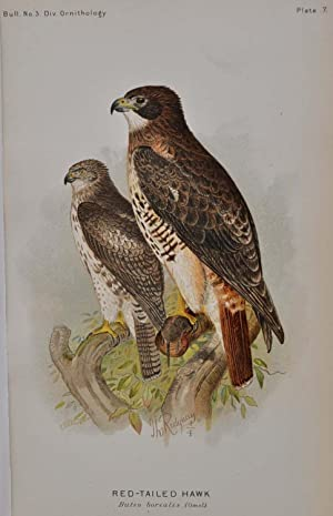 THE HAWKS AND OWLS OF THE UNITED STATES In Their Relation to Agriculture. U.S. Department of ...