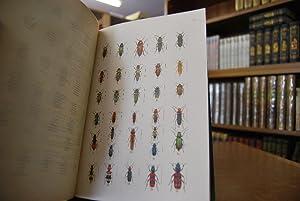 Die Käfer. Ihr Bau und ihre Lebensweise nebst Anleitung zur Beobachtung, Aufzucht und zum Sammeln. ...