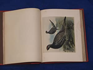Game-Birds and Shooting Sketches: Millais J G