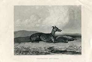 Animales. Dog. Greyhound and Hare