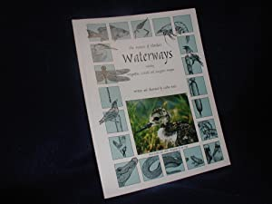 The Nature of Florida's Waterways, Including Dragonflies, Cattails, and Mangrove Snapper