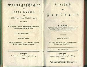 Lehrbuch der Zoologie. Spezielle Zoologie - Insekten (Schluss), Myriopoden, Ringelwürmer.: ...
