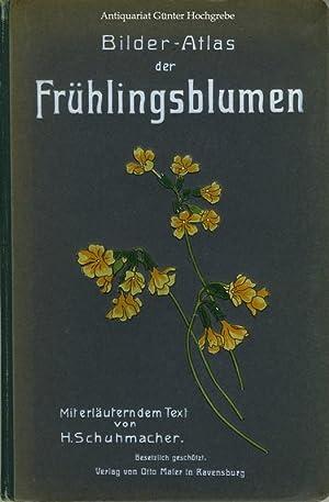 Bilder-Atlas der Frühlingsblumen.