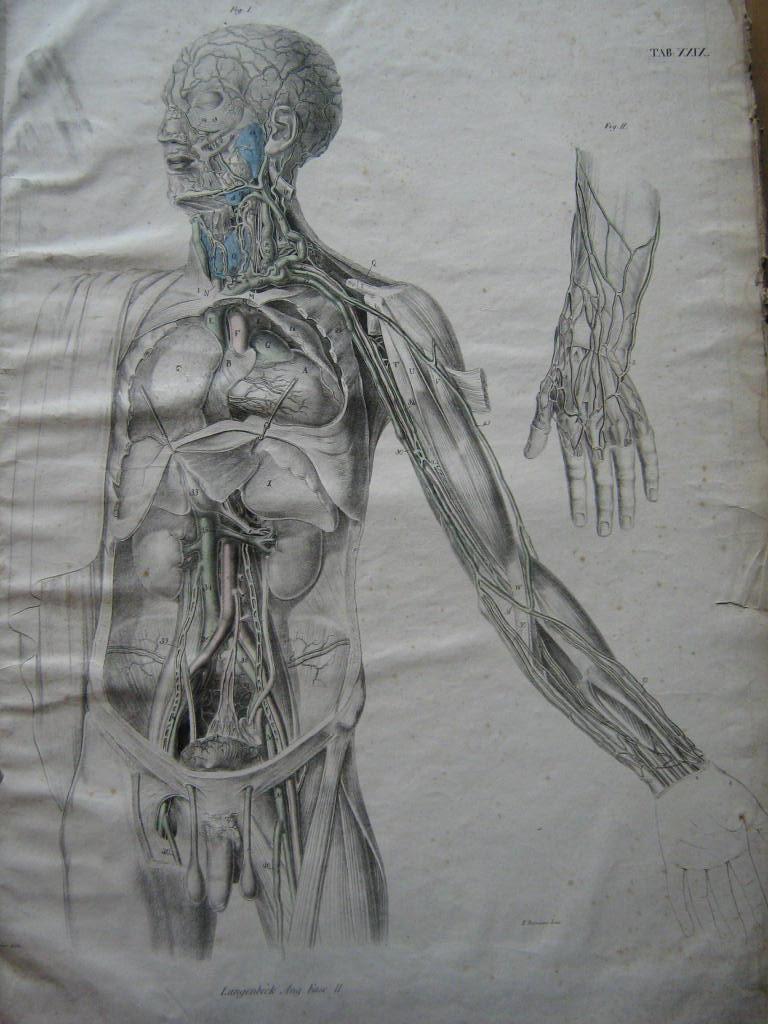 icones anatomicae - ZVAB