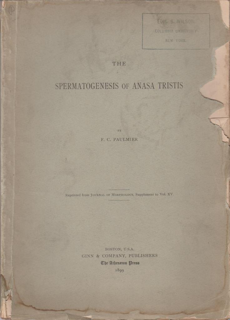 The Spermatogenesis of Anasa Tristis: Paulmier, F.C.