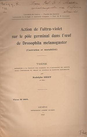 Action de l'ultra-violet sur le pole germinal dans l'oeuf de Drosophila melanogaster (...