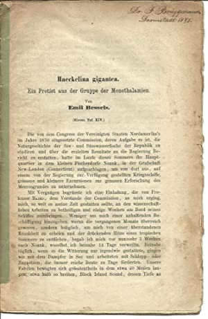 Haeckelina gigantea. Ein Protist aus den Gruppe der Monothalmien: Bessels, Emil