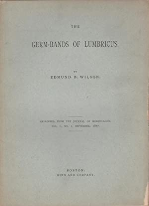 The Germ-Bands of Lumbricus: Wilson, Edmund B.