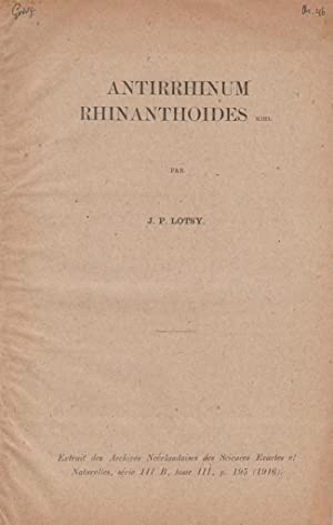 Antirrhinum Rhinanthoides: Lotsy, J.P.