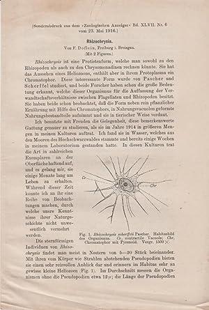 Rhizochrysis: Doflein, F.; Breisgau, Freiburg L.
