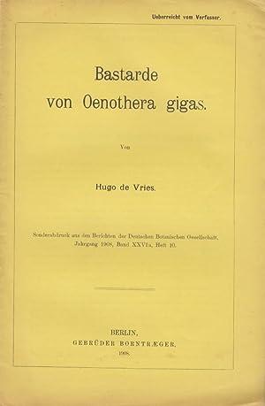 Bastarde von Oenothera gigas: de Vries, Hugo