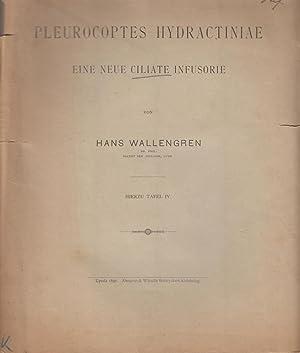 Pleurocoptes Hydactiniae eine Neue Ciliate Infusorie: Wallengren, Hans