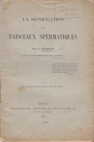 La Signification des Faisceaux Spermatiques: Bugnion, E.