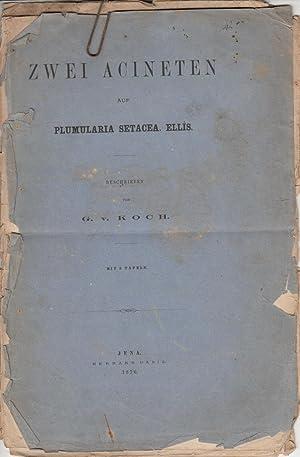 Zwei Acineten auf Plumularia Setacea. Ellis.: Koch, G. v.