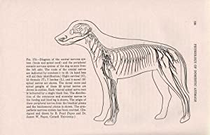 The Physiology of Domestic Animals: Dukes, H.H.